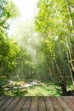 在雨林的木地板 免版税图库摄影