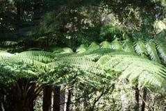 在雨林的树 库存照片