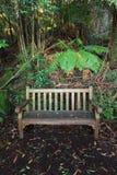 在雨林的湿长木凳 免版税图库摄影