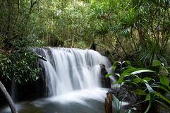 在雨林的瀑布 免版税库存照片
