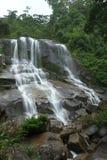 在雨林的瀑布 库存照片