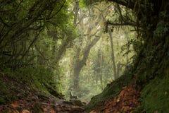 在雨林的秘密斑点 库存照片
