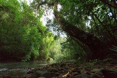 在雨林的运河 免版税库存照片