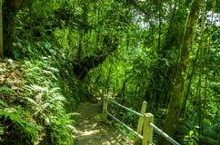 在雨林里面的美丽的道路有湿气植物的,位于Mindo 图库摄影