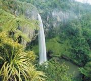 在雨林高的视图的瀑布 图库摄影