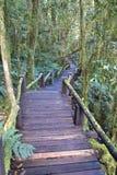 在雨林,泰国的平安的木路 图库摄影