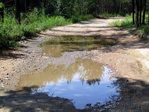 在雨水坑的森林公路  免版税库存照片