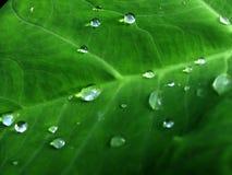 在雨珠的绿色叶子 免版税图库摄影