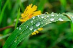 在雨珠的绿草 免版税库存照片