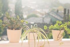 在雨的花 图库摄影
