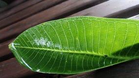 在雨以后弄湿在木庭院长凳的绿色叶子 库存图片