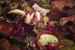 在雨以后的下落的叶子 库存图片