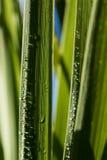 在雨以后的丝兰叶子 免版税库存照片