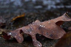 在雨以后的叶子 免版税库存照片