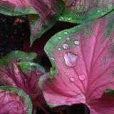 在雨以后的叶子 库存照片