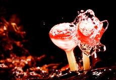 在雨以后的新鲜的蘑菇在森林里 免版税库存图片