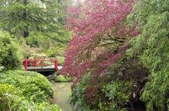 在雨以后的春天庭院 免版税库存图片