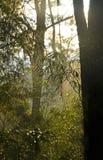 在雨以后的有薄雾的森林场面 免版税库存图片