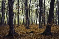 在雨以后的有薄雾的森林 库存图片