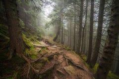 在雨以后的有薄雾的森林 库存照片