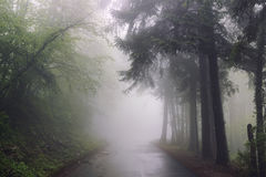 在雨以后的有薄雾的路 免版税图库摄影