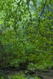 在雨以后的森林, Greenbrier, TN 免版税库存图片