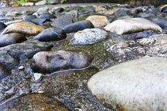 在雨以后的湿石头 免版税库存照片