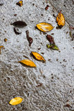 在雨以后的湿边路,与叶子 图库摄影