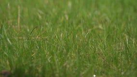 在雨以后的湿绿草 股票视频