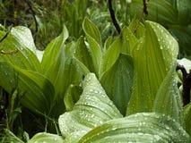 在雨以后的灌木在山草甸 库存照片