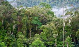 在雨以后的热带森林 免版税库存照片
