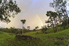 在雨以后的美好的风景在全国生物多样性骗局 库存图片