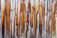 在雨以后的老木纹理 免版税图库摄影