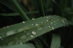 在雨以后的草 免版税库存照片