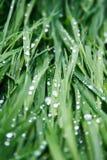 在雨以后的草 库存图片