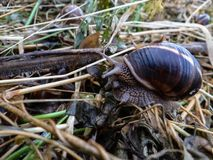 在雨以后的蜗牛 免版税库存照片