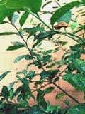 在雨以后的蝶蛹 免版税库存照片