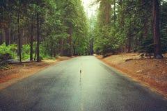在雨以后的路在森林 2007年被采取的加利福尼亚1月国家公园美国优胜美地 免版税库存照片