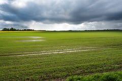 在雨以后的领域 库存图片