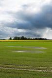 在雨以后的领域 免版税库存图片