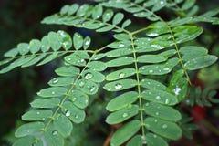 在雨以后的绿色事假,用水下降 免版税库存图片