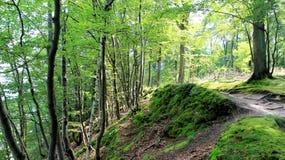 在雨以后的绿色森林小山走道 免版税库存图片