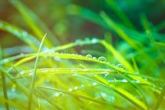 在雨以后的绿草与水下落和太阳光飘动 免版税库存照片