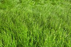 在雨以后的绿草背景 免版税图库摄影