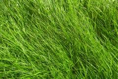 在雨以后的绿草背景 免版税库存图片