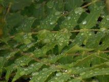 在雨以后 免版税库存照片