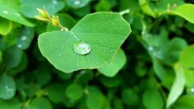 在雨以后 免版税图库摄影