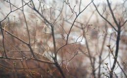 在雨水滴的树枝  库存照片