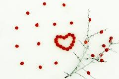 在雪一个分支用红色莓果 重点查出的形状蕃茄白色 华伦泰` s 库存照片