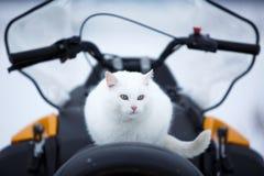 在雪上电车的猫 免版税库存照片